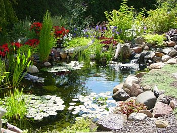 backyard pond with colorful plants