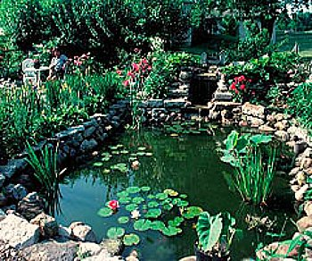 backyard pond with plants and a waterfall