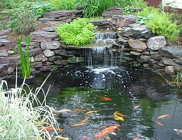 pond with stone waterfall and koi
